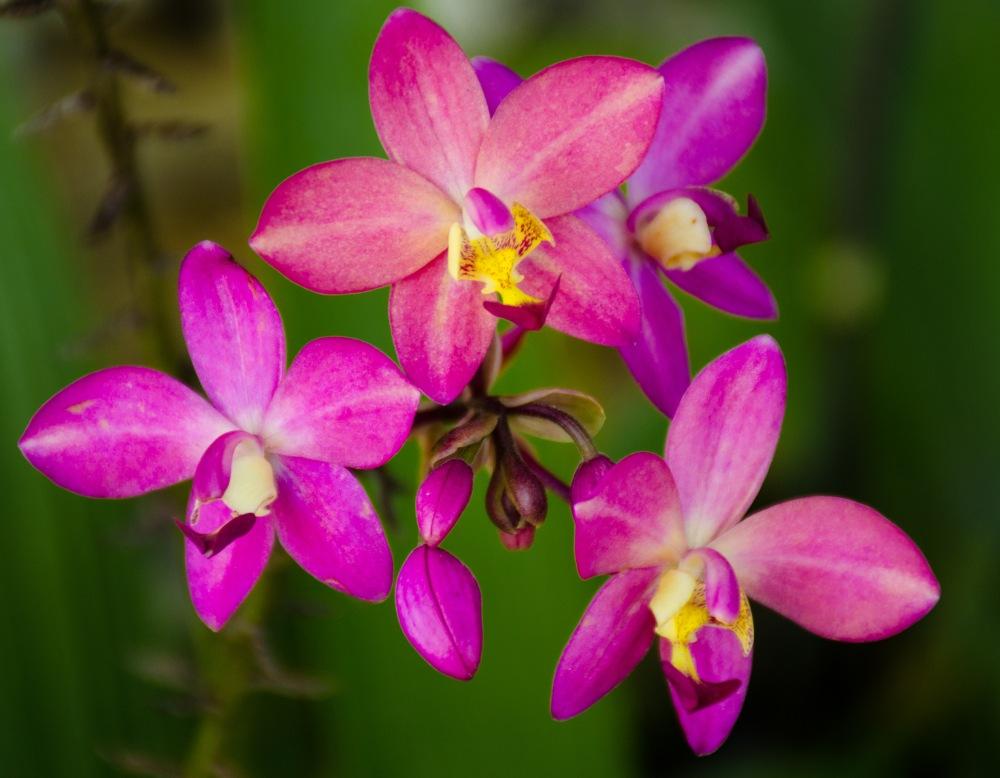 20150106-botanical garden orchids 072