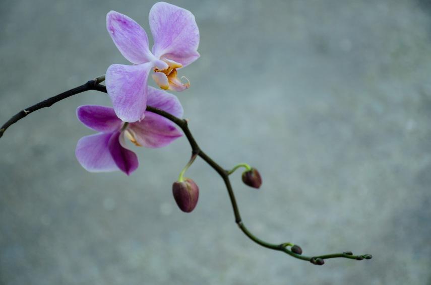 20150106-botanical garden orchids 107