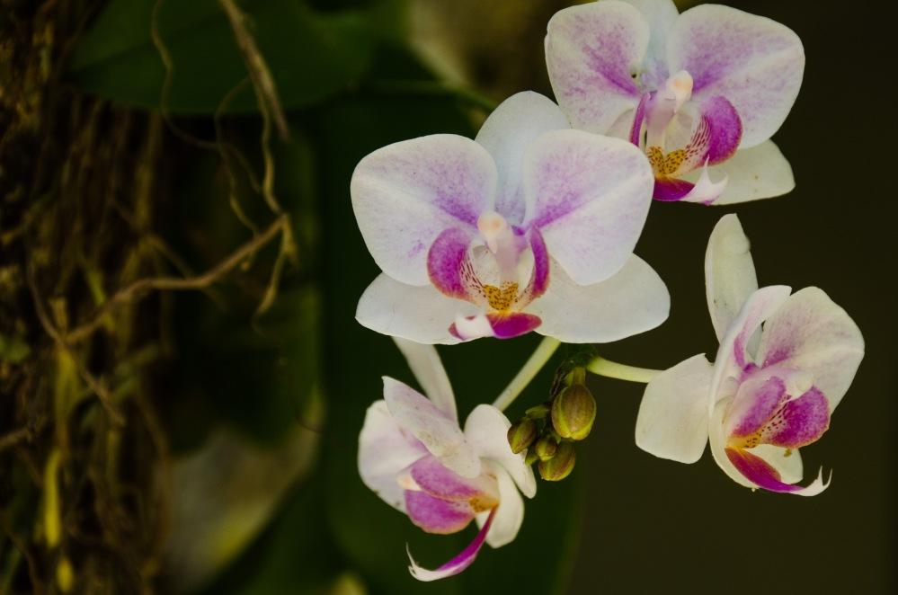 Ny Orchids