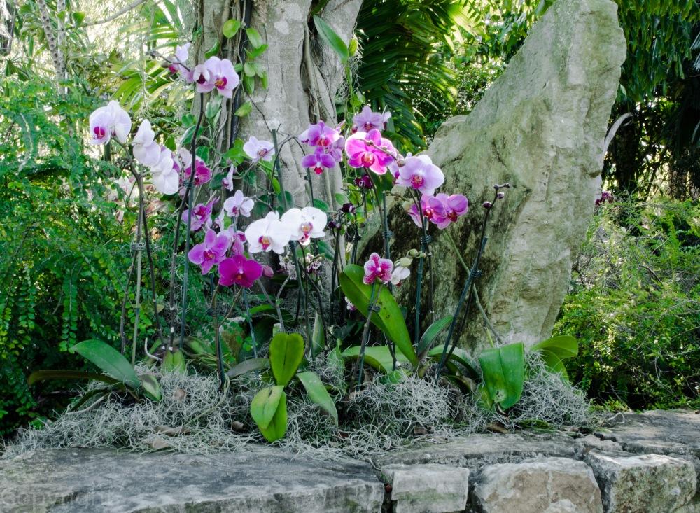 20150127-Botanical garden 110