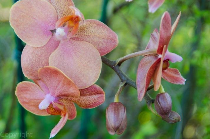 20150127-Botanical garden 117