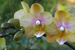 20150127-Botanical garden 118