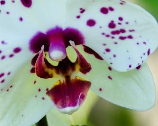 20150127-Botanical garden 121