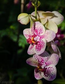 20150127-Botanical garden 134