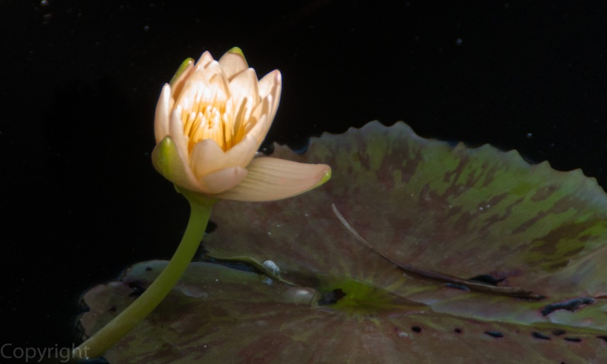 20150127-Botanical garden 186