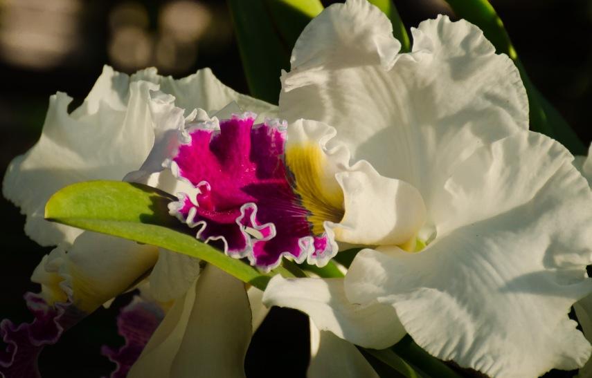 20150106-botanical garden orchids 063