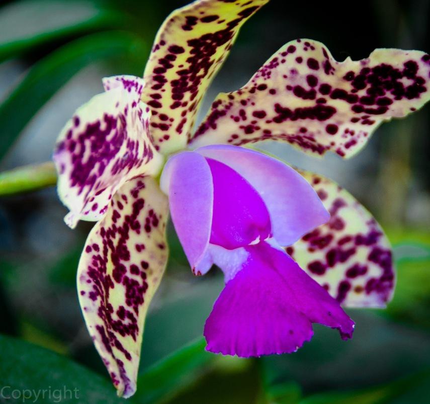 20150127-Botanical garden 167