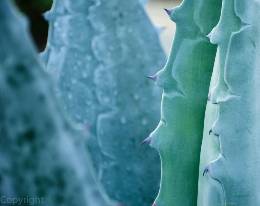 20150210-Botanical creatures 060