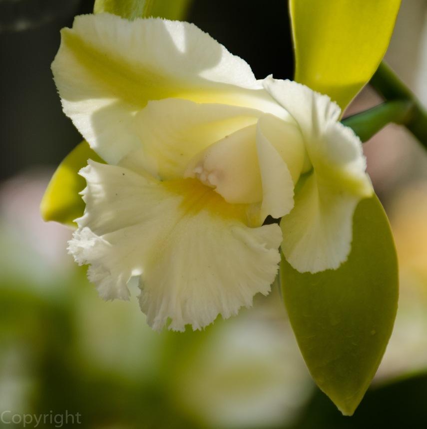 20150210-Botanical creatures 355