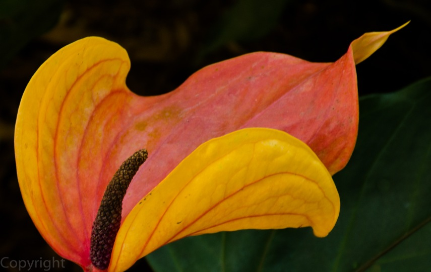 20150210-Botanical creatures 396
