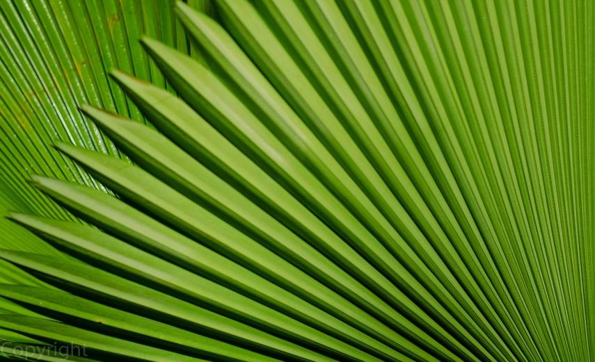 20150303-amazon botanical garden 191