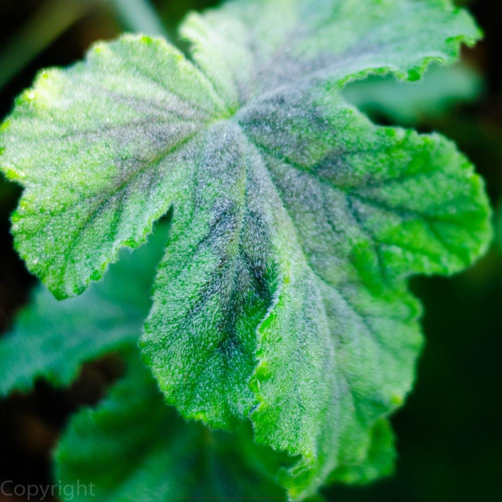 20150303-amazon botanical garden 218