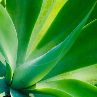 20150303-amazon botanical garden 264