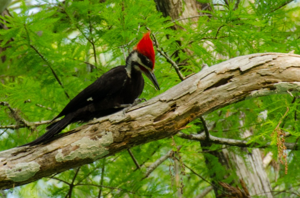 20150326-Everglades 101