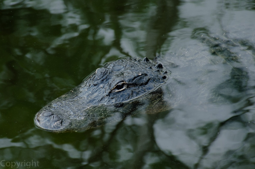 20150326-Everglades 167