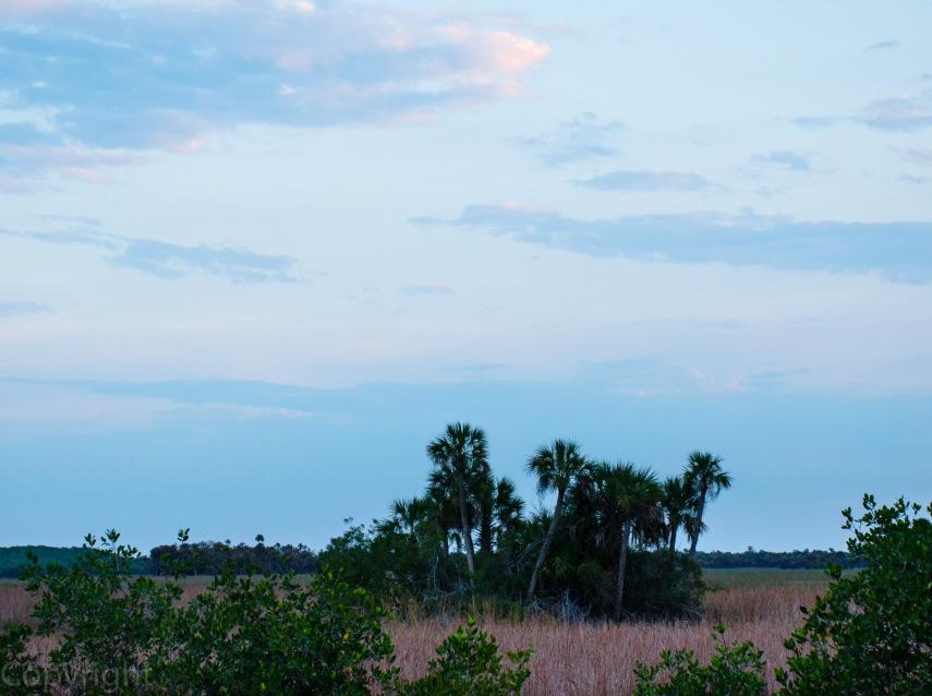 20150326-Everglades 048