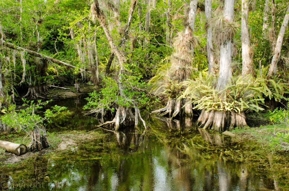 20150326-Everglades 127