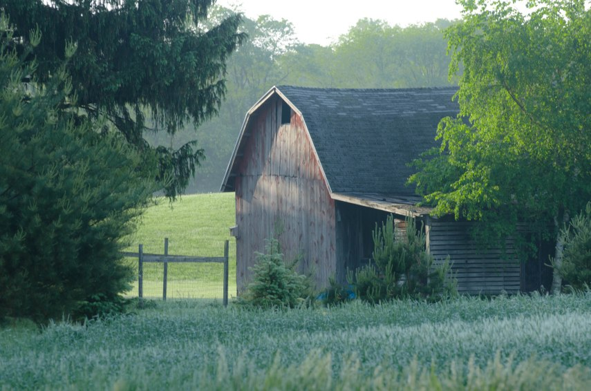 20150528-flowers and barns 034