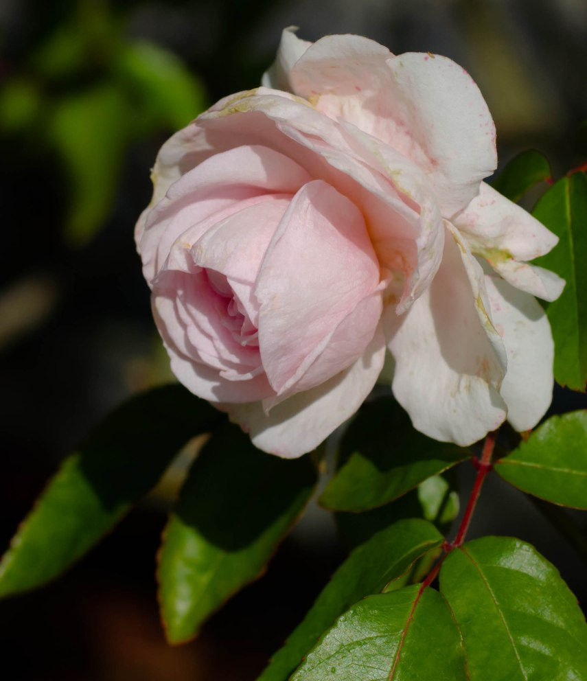 20150303-amazon botanical garden 302-2