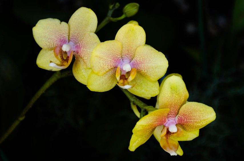 20150310-botanical 113