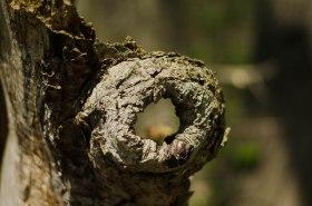 A knot-hole window. Fun to say.