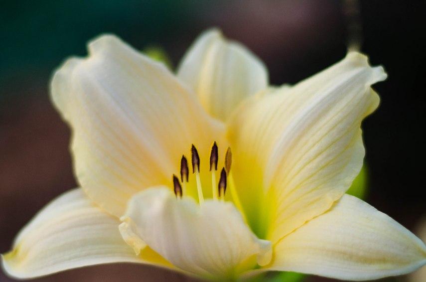 20130719-flowers 028-2